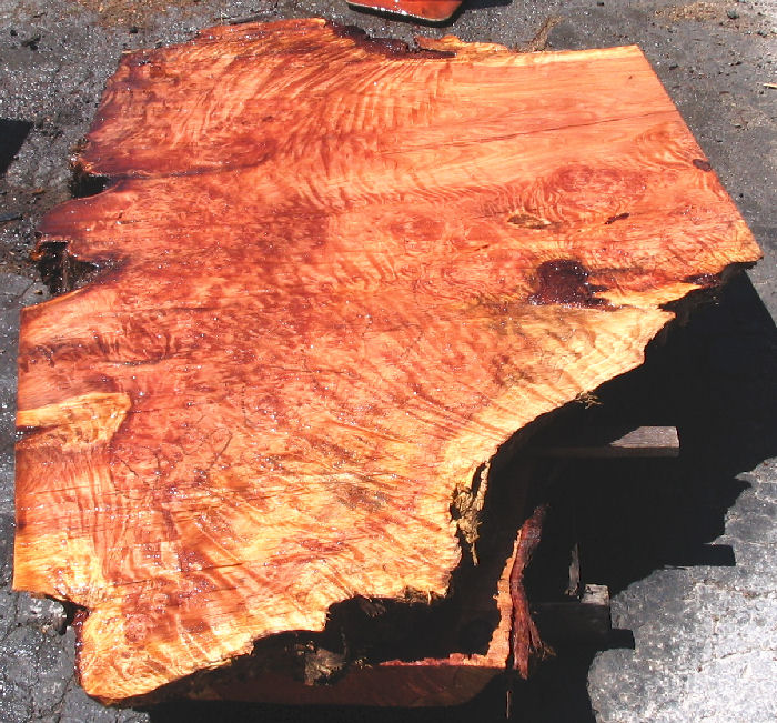 How to finish burl wood slabs ehow ask home design for How to finish a wood slab